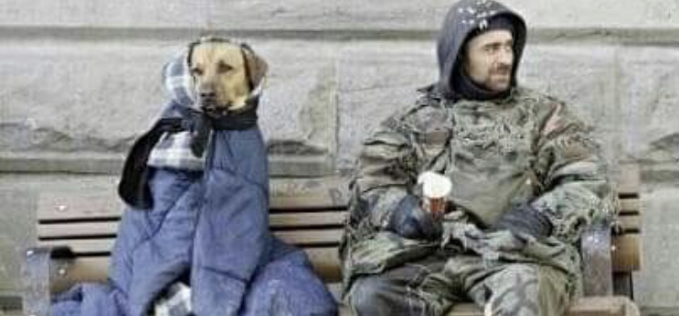 Does the British Public Value the Welfare of Animals More Than The Homeless? By KellyGrehan